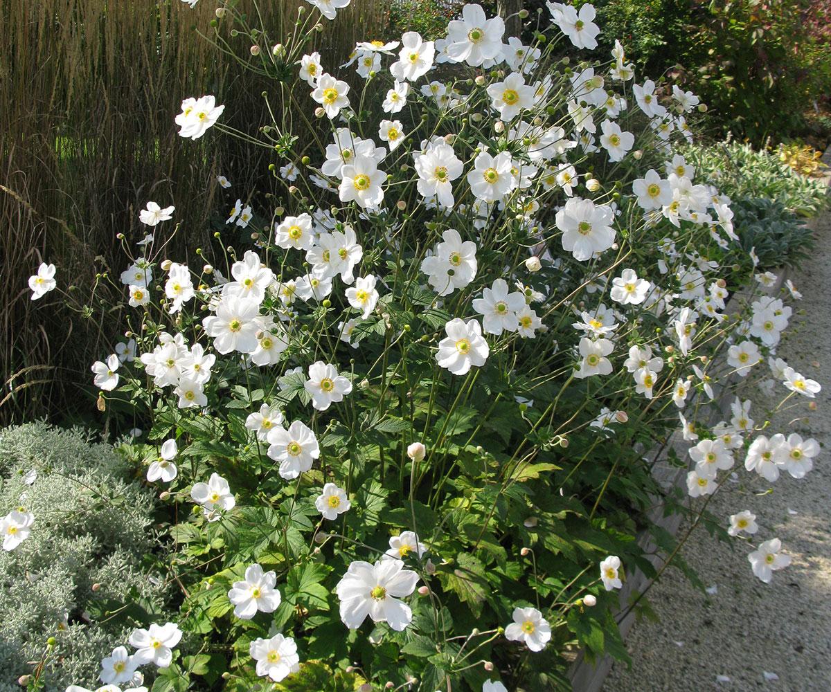 gartenbau_pflanzen_ehrsam_16