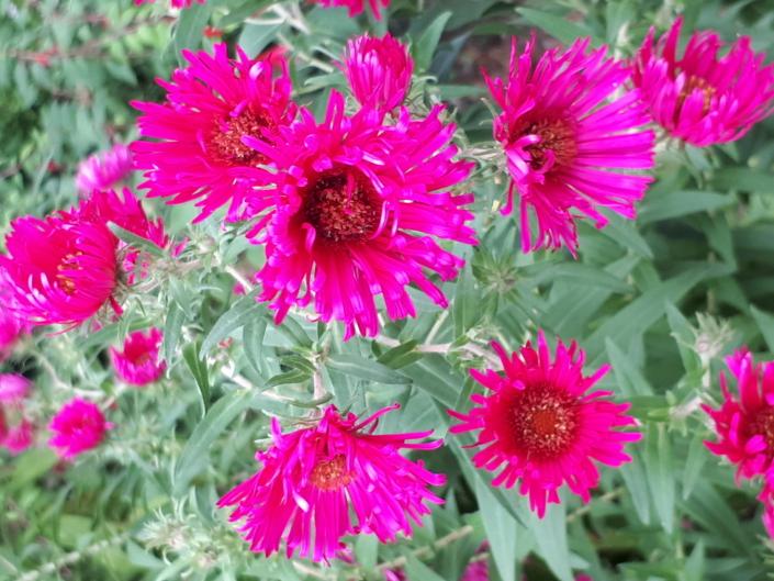 Gartenbau_Pflanzen_Herbst