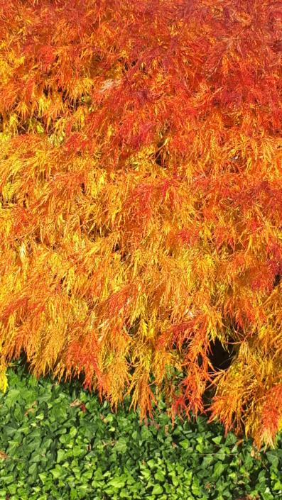 Gartenbau_Baum_Herbst