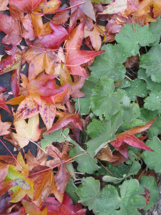 Gartenbau_Laub_Herbst