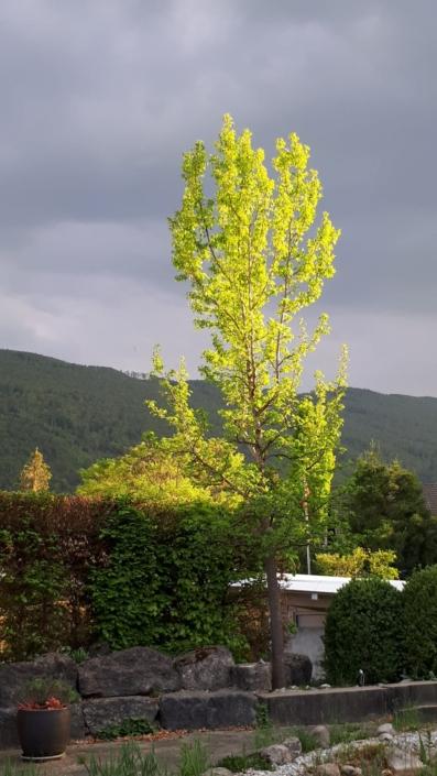 Garten Amber Baum Fruehling