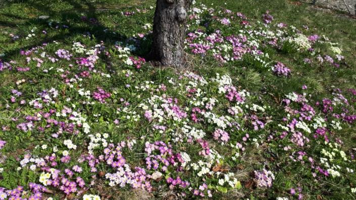 Garten Fruehling Blumen Blueten