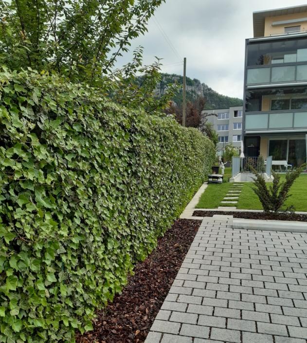 Inselipark Lebhag Efeu Sichtschutz Steine Parkplatz